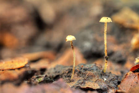 Super small mushrooms in het Amsterdamse bos  Amsterdam wood  in the Netherlands  HDR photo