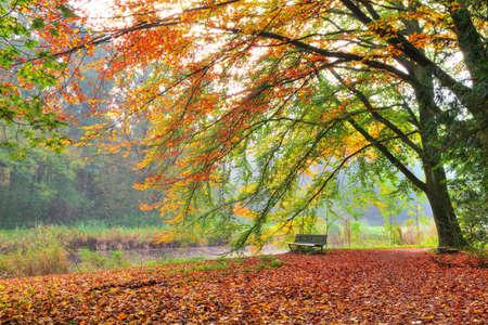 HET Amsterdamse에 밝은 색깔의 가을 나무 아래 벤치의 아름 다운가보기 네덜란드 HDR 암스테르담 나무 보스 스톡 콘텐츠