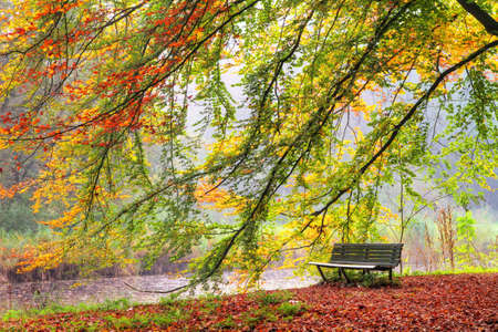 Beautiful autumn view of a bench under a bright colored autumn tree in het Amsterdamse bos  Amsterdam wood  in the Netherlands  HDR photo