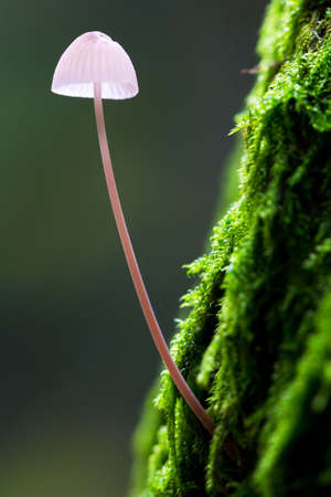 bos: Small toadstool on a mossy tree in het Amsterdamse bos  Amsterdam wood  in the Netherlands