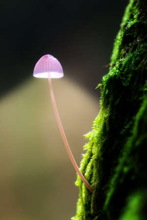 toadstool: Energy concept of a small toadstool on a mossy tree projecting light as a lamp in het Amsterdamse bos  Amsterdam wood  in the Netherlands