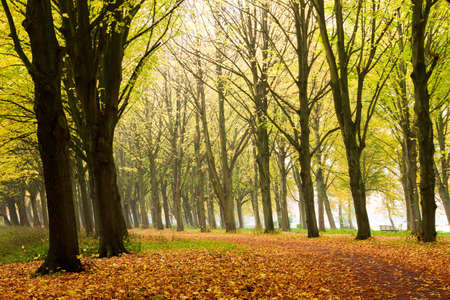 bos: Beautiful colored trees in het Amsterdamse bos  Amsterdam wood  in the Netherlands
