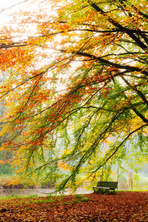 bos: Beautiful autumn view of a bench under a bright colored autumn tree in het Amsterdamse bos  Amsterdam wood  in the Netherlands