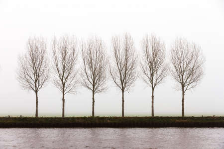 A row of trees on the side of a canal on a foggy winter day photo