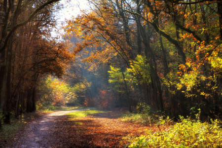 Beautiful autumn colors in a dreamy scene in the woods in  het Spanderswoud  in the Netherlands  HDR photo