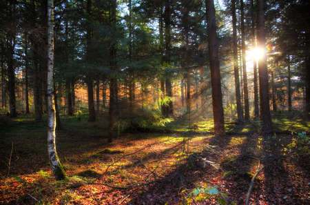 Beautiful sun burst and shadows in autumn in  het Spanderswoud  in the Netherlands  HDR photo