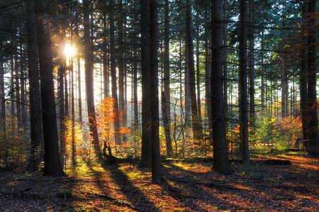 네덜란드 HDR에 HET Spanderswoud 가을에 아름다운 태양 버스트과 그림자 스톡 콘텐츠