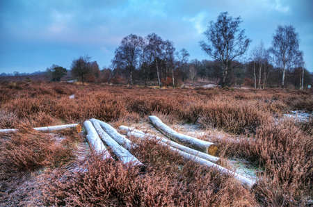 posbank: Early, cold winter morning at the Posbank in the Netherlands with some frozen logs in the heathland  HDR