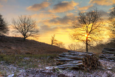 veluwe: Early, cold winter morning at the Posbank in the Netherlands with a rising sun and piles of logs  HDR