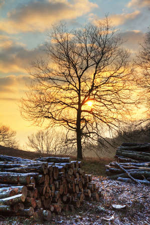 Early, cold winter morning at the Posbank in the Netherlands with a rising sun and piles of logs  HDR Stock Photo - 19119467
