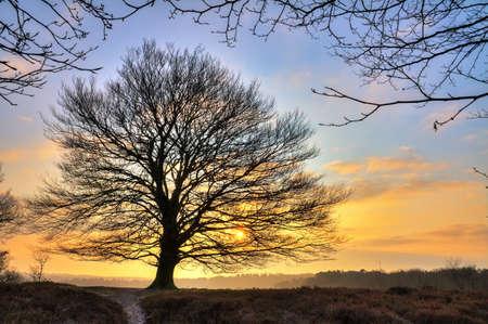 초기 큰 자유로운 서있는 나무의 HDR 뒤에 떠오르는 태양과 네덜란드의 Posbank에서 추운 겨울 아침 스톡 콘텐츠