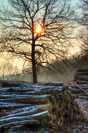 Early, cold winter morning at the Posbank in the Netherlands with a rising sun and piles of logs  HDR photo