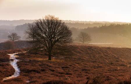posbank: Beautiful winter sunrise landscape at national park the Posbank in the Netherlands Stock Photo