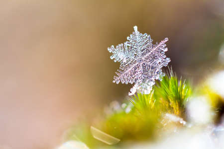 Beautiful close up image of a snowflake on the ground in nature photo