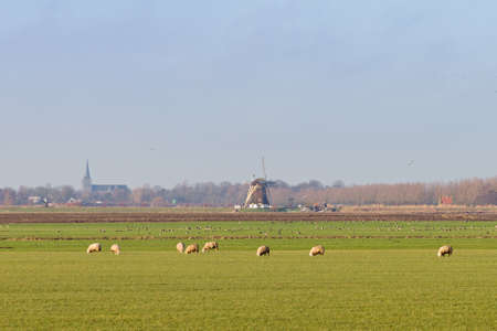 Typical dutch landscape with sheep, churches and a windmill in the background photo