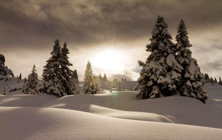 arbol de pino: Hermoso paisaje de nieve fresca de pinos en Les Portes du Soleil, en los Alpes europeos Foto de archivo