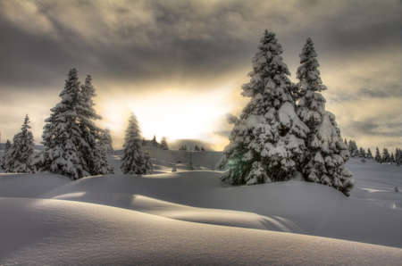 off piste: Beautiful fresh powder landscape with pine trees in Les Portes du Soleil in the European Alps  HDR