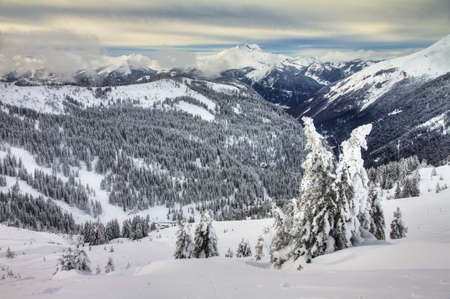soleil: Beautiful fresh powder landscape with pine trees in Les Portes du Soleil in the European Alps  HDR