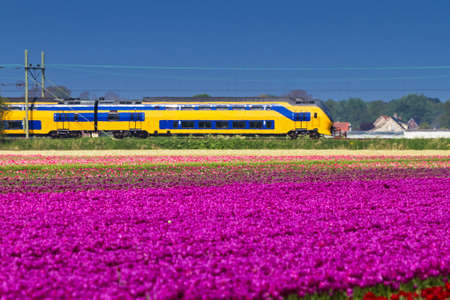 Beautiful spring view on a tulip field in the Netherlands with a train in the background 스톡 콘텐츠