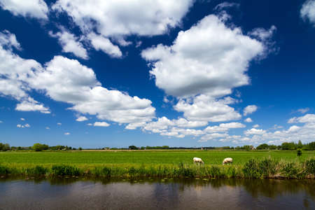 Typical dutch rural scene in spring with sheep at the river and a beautiful cloudscape in Baambrugge, the Netherlands  photo