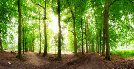 Beautiful wide angle panorama in the forest in spring in the Netherlands photo