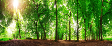 panoramic: Beautiful 360 degree panorama in the forest in spring in the Netherlands