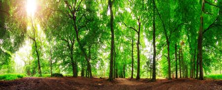 Prachtige panorama van 360 graden in het bos in de lente in Nederland