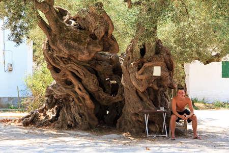 Jeune homme assis à côté de l'olivier de 2000 ans arbre Olea europaea dans Exo Hora, sur l'île de Zakynthos Il est le plus vieil arbre sur l'île Banque d'images