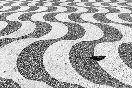 Pigeon on the beautifully paved Pedro IV square in Lisbon, Portugal photo