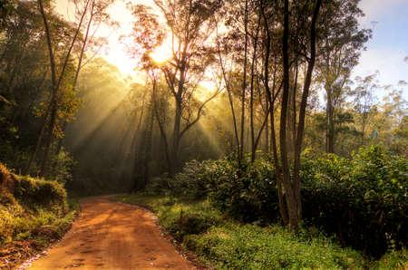 Beautiful morning sunburst in the jungle of Andasibe-Mantadia, Madagascar  HDR photo