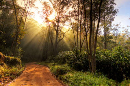 Beautiful morning sunburst in the jungle of Andasibe-Mantadia, Madagascar  HDR photo