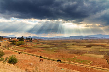 Agricultural fields in Madagascar with some Zebu and a beautiful cloudscape photo