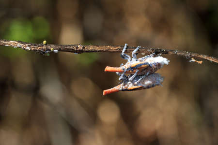anja: Some sort of beautiful orange Lantern bugs in Anja reserve, Madagascar