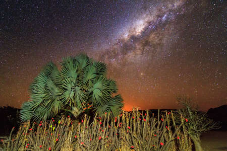 Some crown-of-christ shrubs and a palm tree with the awesome milky way behind it in Isalo, Madagascar photo