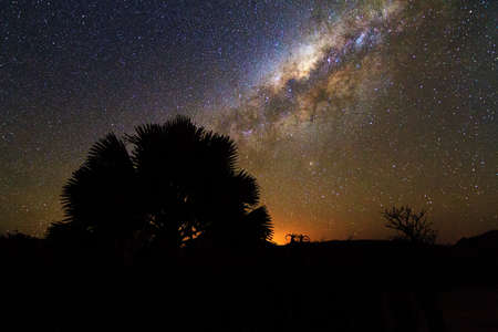 A small tree in front of the awesome milky way in Isalo, Madagascar photo