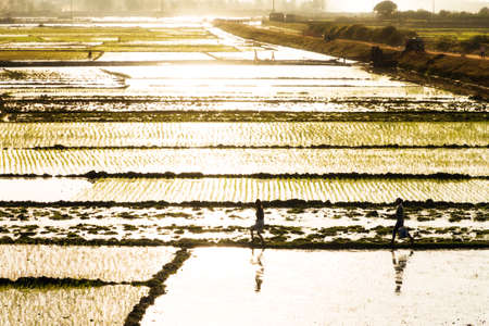 paddys: Malagasy people walking in the afternoon sunshine over the many rice paddys in Tana, Madagascar