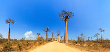 Beautiful panorama at the avenue of the baobabs in Madagascar Stock Photo