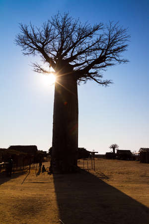 Beautiful backlit Baobab tree at the avenue of the baobabs in Madagascar Stock Photo