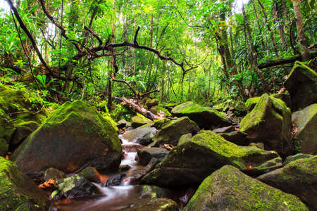 jungle: Beautiful view of a stream in the rainforest jungle of the Masoala National Park in Madagascar