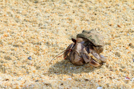 decapod: Hermit crab on the beach of Masoala, Madagascar Stock Photo