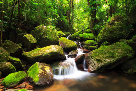 rainforest: Beautiful view of a stream in the rainforest jungle of the Masoala National Park in Madagascar