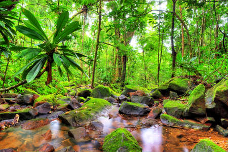 waterfall in forest: Beautiful HDR view of a stream in the rainforest jungle of the Masoala National Park in Madagascar Stock Photo