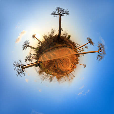 alley of baobabs: Beautiful little planet at the avenue of the baobabs in Madagascar Stock Photo