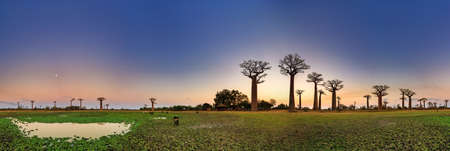 Beautiful 360 degree panorama after sunset at the avenue of the baobabs in Madagascar Stock Photo