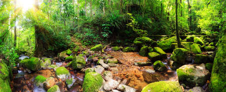 Beautiful 180 degree panorama of a stream in the rainforest jungle of the Masoala National Park in Madagascar
