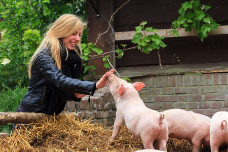 Young very blond girl having fun with the piglets in the petting zoo in spring 스톡 콘텐츠