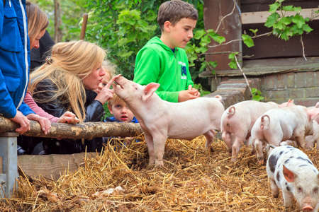 Young kids are having fun with the piglets in the petting zoo in Zoeterwoude, The Netherlands, on April 30, 2014