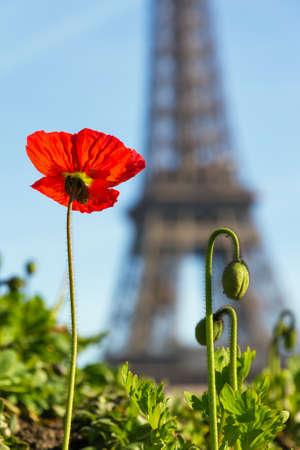Belle pavot avec la tour Eiffel en arrière-plan à Paris, France