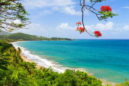 Beautiful tropical summer view of Puerto Rico with red flowers and a white beach