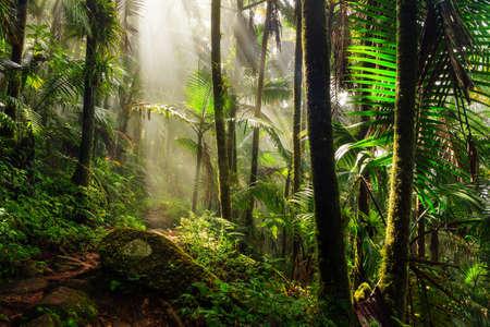 Piękne ścieżki w dżungli przez National Forest El Yunque w Puerto Rico